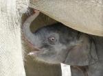 elephanteau.jpg